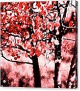 Red Aspen II Acrylic Print