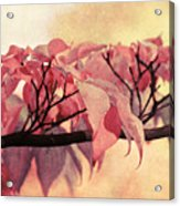 Red Autumn Day Acrylic Print