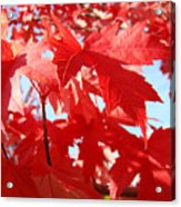 Red Autumn Leaves Art Prints Canvas Fall Leaves Baslee Troutman Acrylic Print