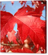 Red Autumn Leaves Fall Art Colorful Autumn Tree Baslee Troutman Acrylic Print