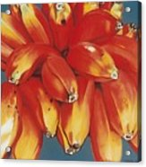 Red Bananas Of Jocotepec Acrylic Print