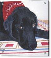 Red Bandana Acrylic Print