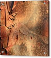 Red Bark Nature Abstract Acrylic Print
