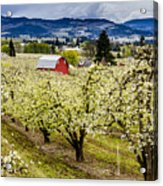 Red Barn And The Pear Orchards Acrylic Print