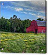 Red Barn In A Yellow Field  Acrylic Print