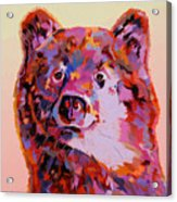 Red Bear Acrylic Print