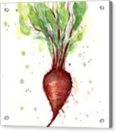 Red Beet Watercolor Acrylic Print