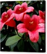 Red Bell Flowers Acrylic Print