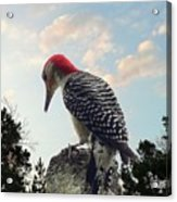 Red-bellied Woodpecker - Tree Top Acrylic Print