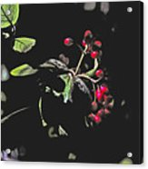 Red Berries And Foliage Acrylic Print