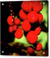 Red Berries Acrylic Print