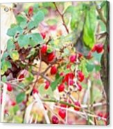 Red Berry New England Acrylic Print