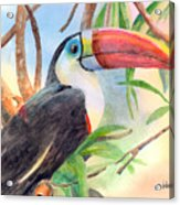 Red-billed Toucan Acrylic Print