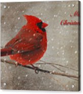 Red Bird In Snow Christmas Card Acrylic Print