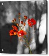 Red Bird Of Paradise Acrylic Print
