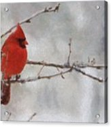 Red Bird Of Winter Acrylic Print by Jeff Kolker