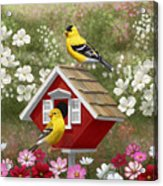 Red Birdhouse And Goldfinches Acrylic Print by Crista Forest