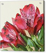 Red Blooms Poster Art Acrylic Print