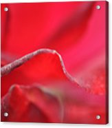 Red Blossom 3 Acrylic Print