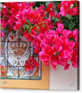 Red Bougainvilleas Acrylic Print
