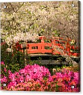 Red Bridge And Blossoms Acrylic Print