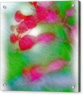 Red Buckeye Acrylic Print