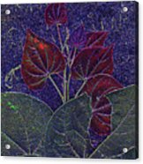 Red Bud Acrylic Print