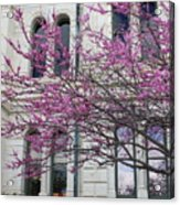 Red Buds And San Antonio City Hall Acrylic Print