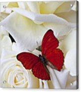 Red Butterfly On White Roses Acrylic Print