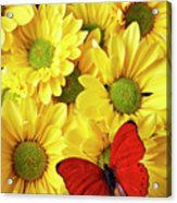 Red Butterfly On Yellow Mums Acrylic Print