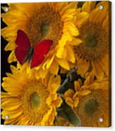 Red Butterfly With Four Sunflowers Acrylic Print