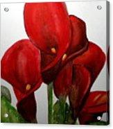 Red Callas Acrylic Print