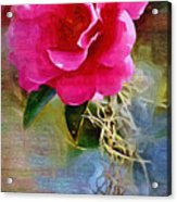 Red Camellia Acrylic Print