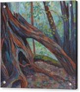 Red Cedar Acrylic Print