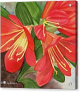Red Clivias - Watercolor Acrylic Print