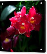 Red Cluster Acrylic Print
