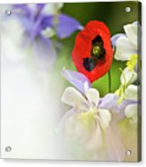 Red Corn Poppy Acrylic Print