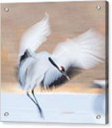 Red Crowned Crane In Kushiro Acrylic Print