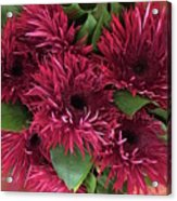Red Daisies Bouquet Acrylic Print