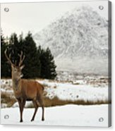 Red Deer Stag And The Buachaille Etive Mor In Winter Acrylic Print