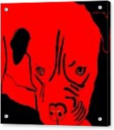 Red Dog Acrylic Print