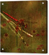 Red Dragonfly Dining Acrylic Print