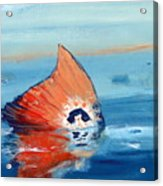 Red Drum Tailing Acrylic Print