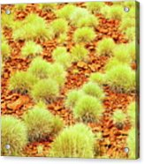 Red Earth And Spinifex 2am-111716 Acrylic Print