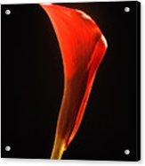 Red Essence Acrylic Print