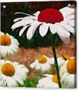 Red Eyed Daisy Acrylic Print