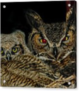 Red Eyed Mama And Baby Horned Owls Acrylic Print