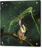 Red-eyed Tree Frog In The Rain Acrylic Print by Michael Durham