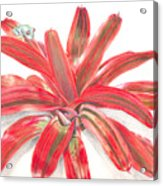 Red-eyed Tree Frog On Bromeliad Acrylic Print