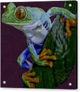 Red Eyed Tree Frog Original Oil Painting 4x6in Acrylic Print